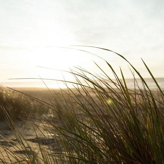 082101 Sur Kirra Beach EDM Launch Template4 788x1024 1 Homepage